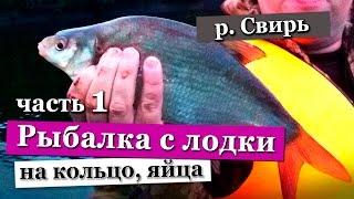Отчеты о рыбалке на реке свирь