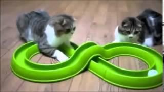 Прикольное видео  Супер ржачные кошки