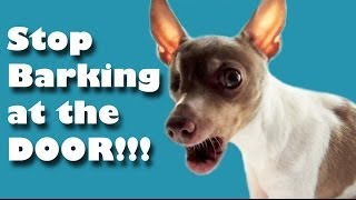 Stop your dog barking at the door - dog training tutorial