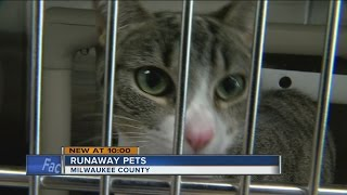 Runway pets flood local animal shelters