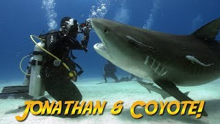 Tiger Sharks with Coyote Peterson!   JONATHAN BIRD'S BLUE WORLD
