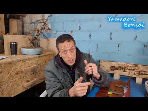 Bonsai in 5 Minuten, Tipps zu Werkzeug Part 1