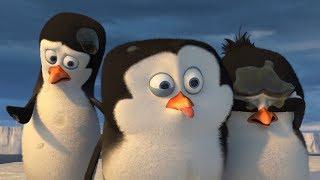 DreamWorks Madagascar em Português | Isso é nojento | Os Pinguins de Madagascar | Desenhos Animados