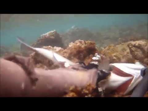 Letto di seggiola pieghevole per pesca