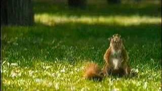 Смотреть онлайн Snickers – столько орехов вы еще не видели