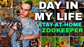 A Day in the Life of a Stay-At-Home Zookeeper