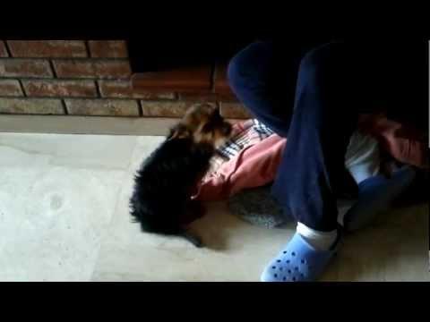 Lunghia su un trattamento di gamba è rimossa