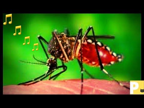 Mosquito#mosquitosound#mosquitosoundeffect#somdemosquitonoouvido#somdepernilongo#soundeffects#Cs3u