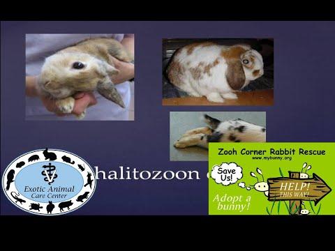 , title : 'Common Rabbit Diseases & Illnesses - E. Cuniculi