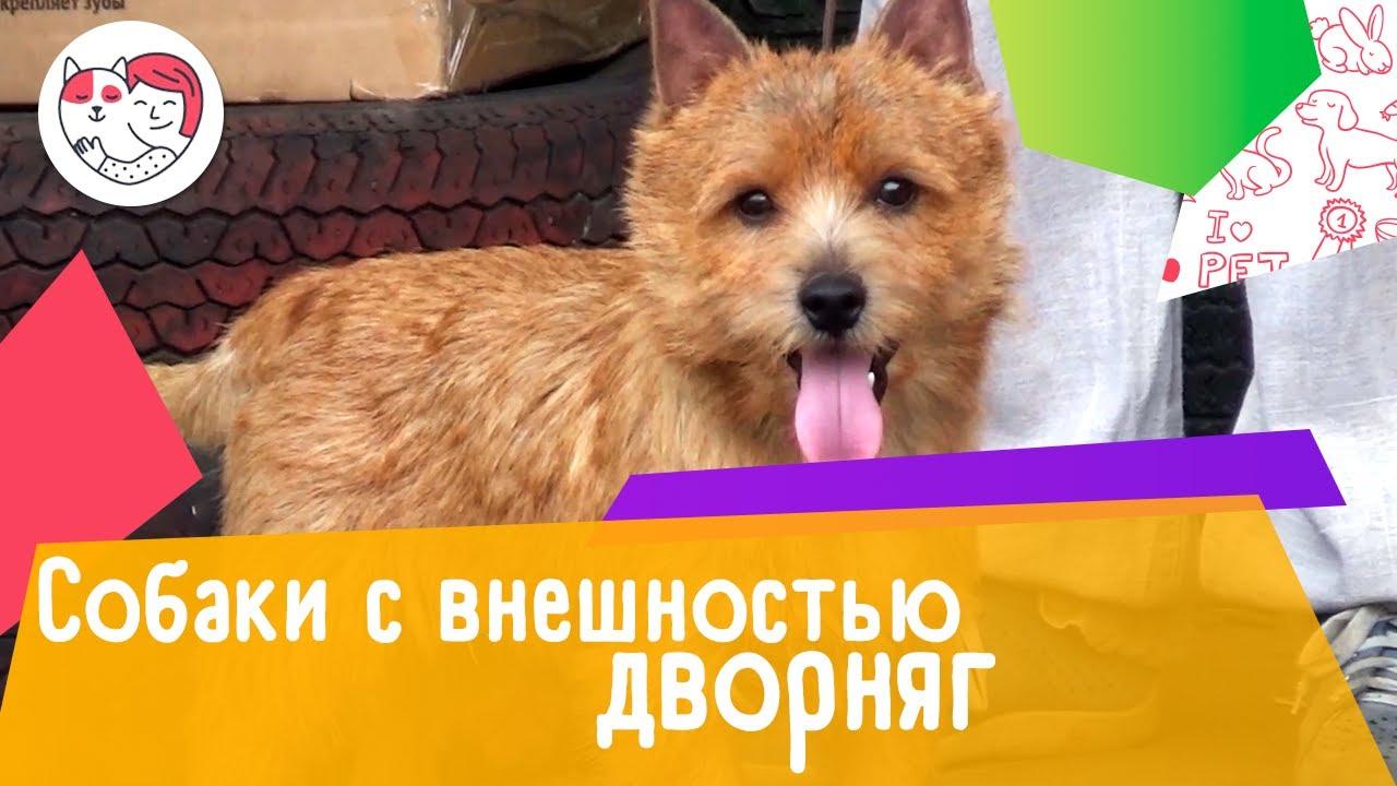 5 породистых собак с внешностью дворняг