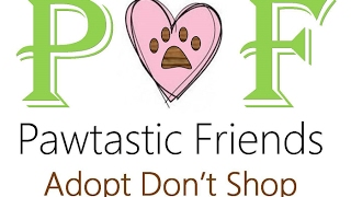 Pawtastic Friends - Learn more about the Enrichment Scholarship Project!