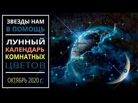 Октябрь 2020 г.   Лунный календарь комнатных растений