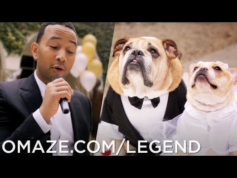John Legend - All Of Me - Dog Wedding Music Video // Omaze
