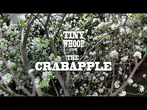 treescapes-episode-4--the-crabapple--tiny-whoop