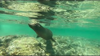 I Met a Sea Lion Underwater! Isabela Island, Galapagos, Ecuador