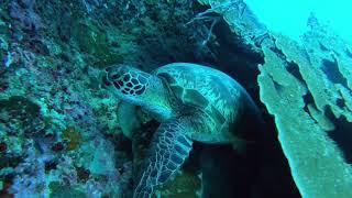 素敵な海の仲間と会いに行くなら!ジンベイザメ・モアルボアルツアー