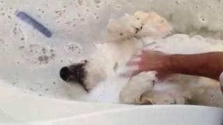 Каспер – пёс, который любит купание!