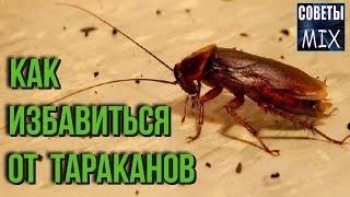 САМЫЙ ПРОСТОЙ СПОСОБ избавится от ТАРАКАНОВ - Youtube видео