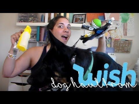 CHEAP Dog Stuff Haul! | WISH App Items For Dogs! | June 2018