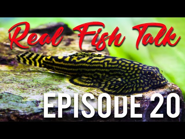 WHAT FISH CLEAN THE TANK? - Ep. 20