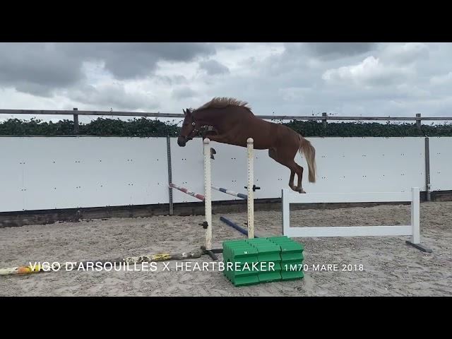Noordman Vigo Playing with the big Jumps