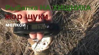 Рыбалка на мазурских озерах июль 2020