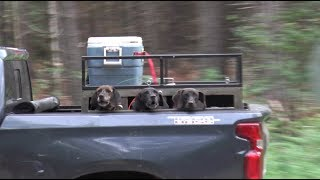 How Long Before Registration is Required for Bear Baiting in Wisconsin?