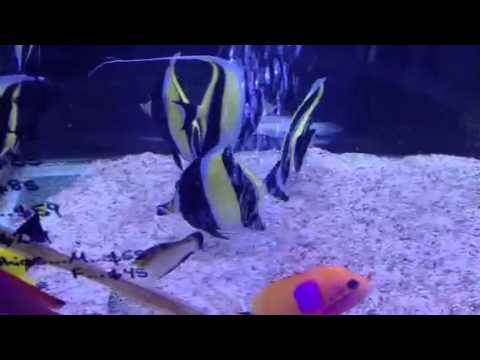 mp4 How To Successfully Keep A Moorish Idol, download How To Successfully Keep A Moorish Idol video klip How To Successfully Keep A Moorish Idol