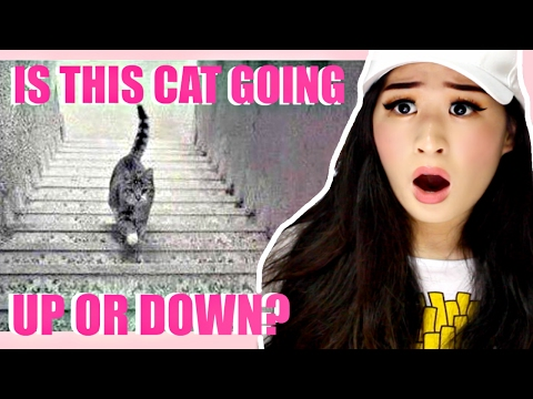 IS THE CAT GOING UP OR DOWN?! | EYE TEST