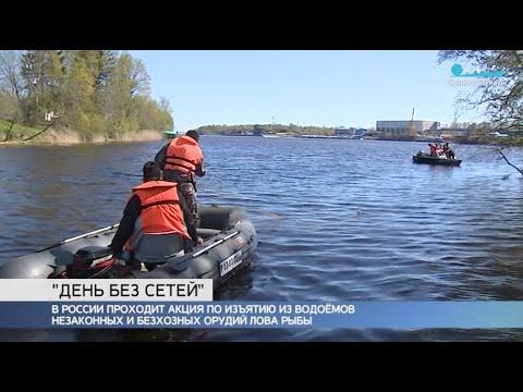 Как в Ленинградской области проходила экологическая акция «Всероссийский день без сетей»