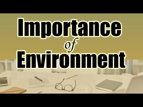 How Environment Affects Your Productivity | How To Create a Productive Working Environment