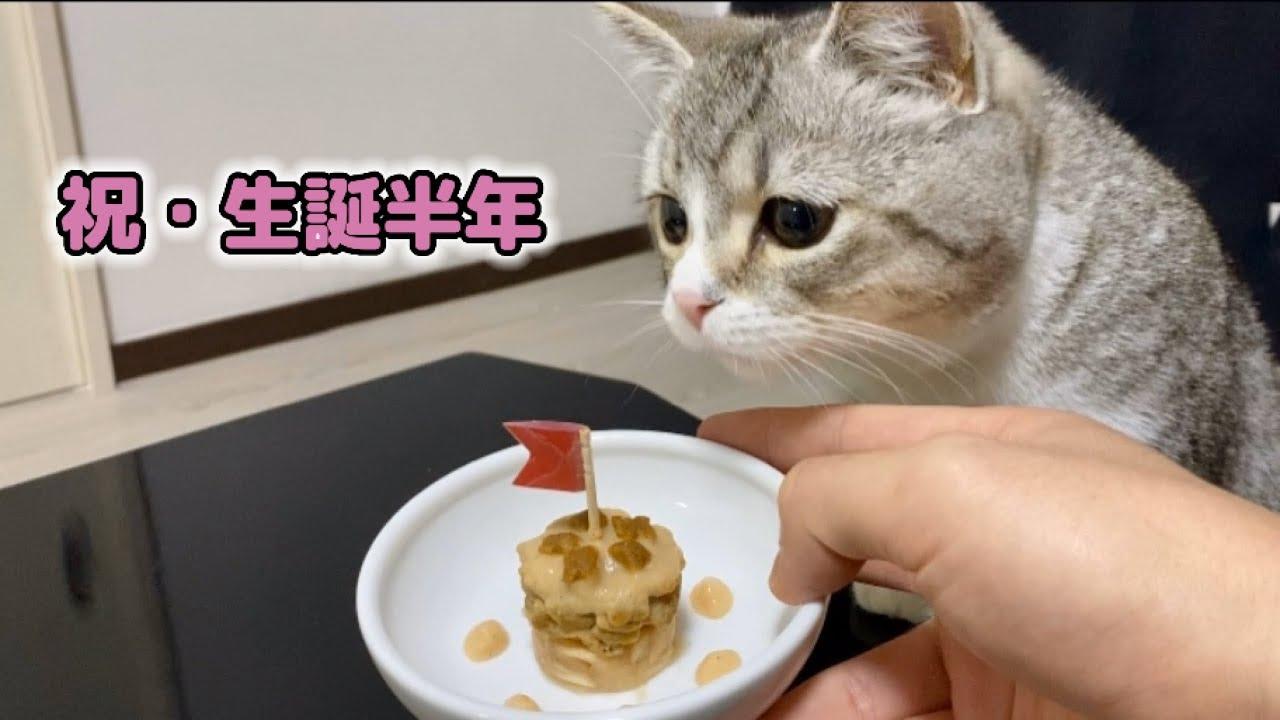特製誕生日ケーキをすごい勢いで食べ尽くしちゃう子猫がこちら…!笑