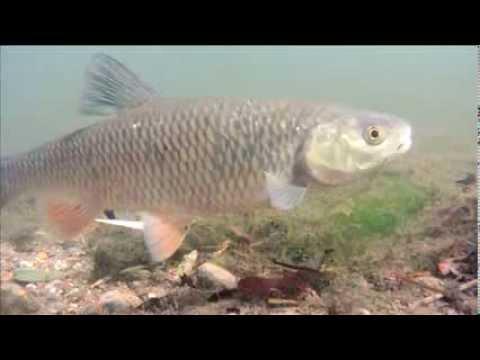 Dyrelivet i River Allen i England