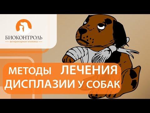 Дисплазия у собак. @ Диагностика и способы лечения дисплазии у собак. Биоконтроль.
