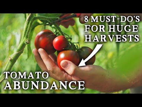 Follow These Tips to Enjoy an Incredible Tomato Season