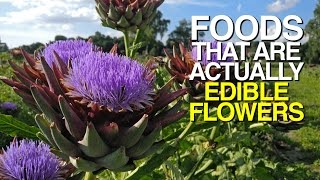 Foods That Are Actually EDIBLE FLOWERS