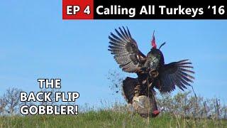 BACK FLIP GOBBLER! - Hunting Public Land - Calling All Turkeys