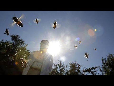Γαλλία: Δραστικά μέτρα για την προστασία των μελισσών