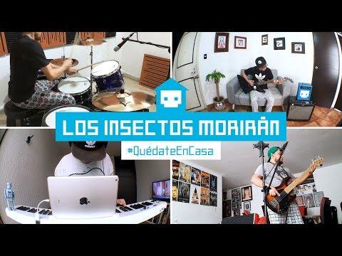 Los insectos morirán ( Versión #QuédateEnCasa )