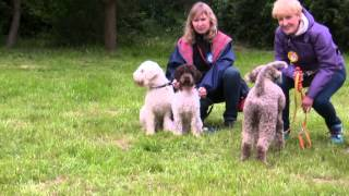 Lagotto meeting, 06.2014