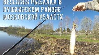 Рыбалка в пушкино московской области форум