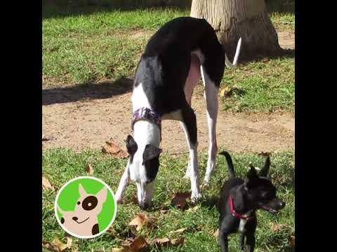 Altea tendrá un nuevo parque canino