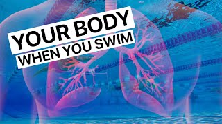 What Happens To Your Body When You Swim?