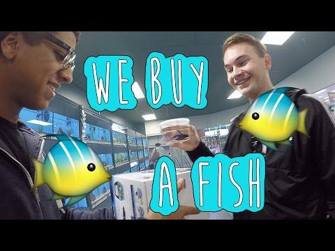 We Buy A Fish | CameronAndChase