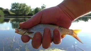 Рыбалка в июле на поплавочную удочку весной