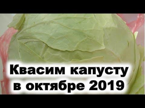 Квасим капусту в октябре 2019 года. Лучшие дни для приготовления витаминного вкусного блюда