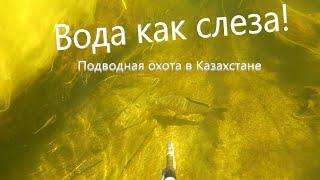 ВОТ ЭТО ПРОЗРАК! Подводная охота, охота и рыбалка в Казахстане! Шиели. Чили.