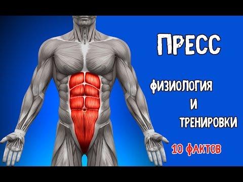 ПРЕСС. Физиология и Тренировки. 10 Фактов