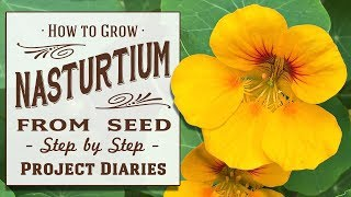 ★ How to: Grow Nasturtium from Seed in Containers (A Complete Step by Step Guide)