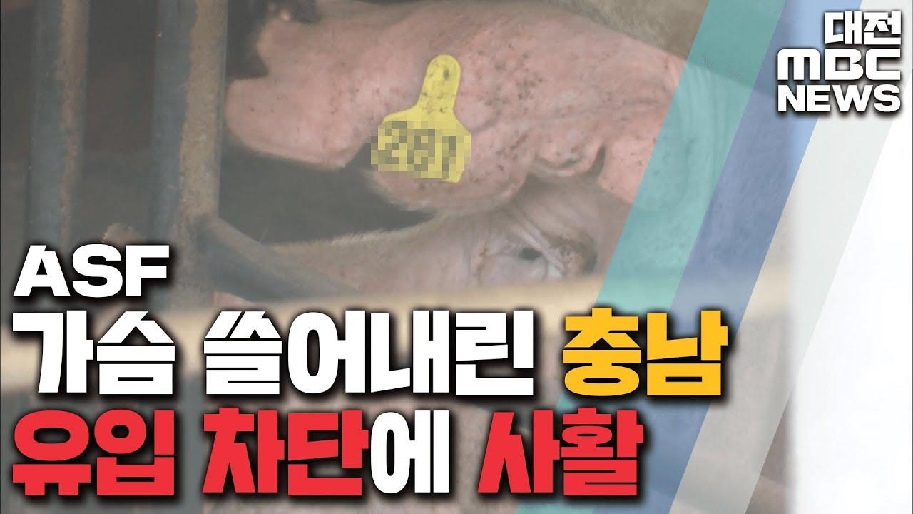 또 ASF 음성 판정..선제적 대응 총력/리포트